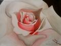 Eine Rose von Anne