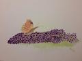 Kerstin Schmetterling
