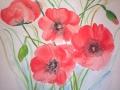 Dieses luftige Aquarell von Mohnblumen hat Anne in der Malschule Maluck angefertigt