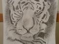 Tiger in Bleistift von Claudia